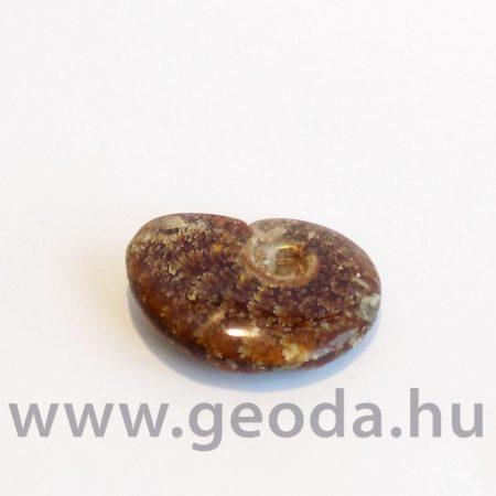 Ammonitesz (madagaszkári, kicsi) 0002