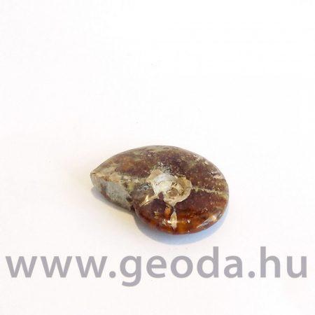 Ammonitesz (madagaszkári, kicsi) 0003