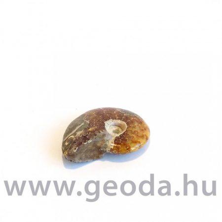 Ammonitesz (madagaszkári, kicsi) 0001